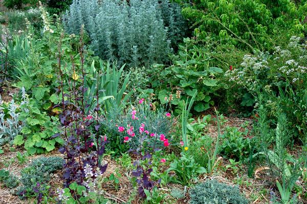 Polyculture Garden