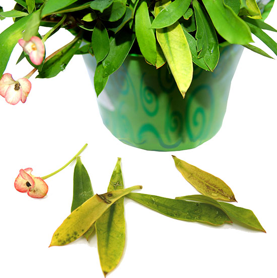 The Ten Most Common Problems Of Houseplants