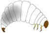 Baby beetles, grubs, have 3 pairs of jointed legs.