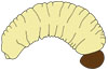 curculio larva