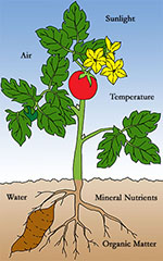 Physical environmental factors include light, water, temperature, and soil.