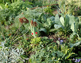 Polyculture: Planting different kinds of plants next to each other keeps pests from finding their favorite food, and prevents disease from spreading easily.