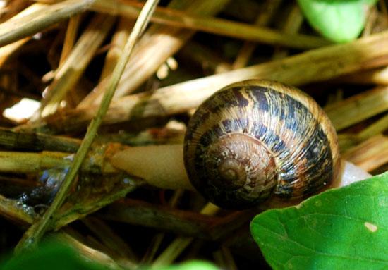 snail slime trail